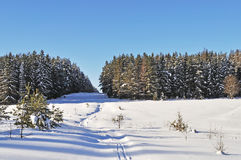 Glade in winter forest on sunny day Royalty Free Stock Photography