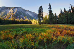 The glade in Yosemite Stock Photos