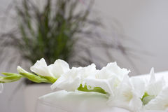 Gladiola flower on bed Royalty Free Stock Photo