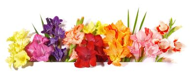 Gladiola Flower Panorama royalty free stock images