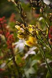 Gladiola flowers Stock Photography