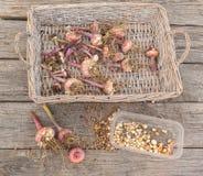 Gladiolebirnen nach dem Ende der Jahreszeit auf einem Abtropfbrett Stockbilder