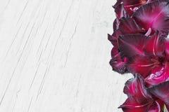 Gladioleblumen Lizenzfreies Stockbild