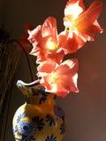 Gladiolen backlit in een vaas Stock Foto