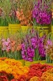 Gladioli au marché d'agriculteurs photographie stock libre de droits