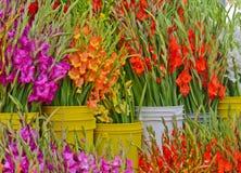 Gladioli au marché d'agriculteurs photographie stock