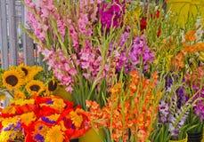 Gladioli au marché d'agriculteurs image libre de droits