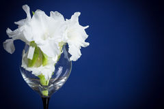 Gladioli blancs Photographie stock libre de droits