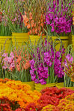 Gladioli at Farmers Market Royalty Free Stock Photography