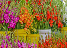 Gladioli at Farmers Market Stock Photography