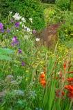 Gladioli at the garden fence Stock Image