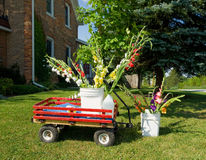 Gladioli standing in a red wagon in the countryside Royalty Free Stock Photos