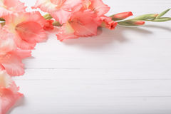 Gladioli on white wooden background Stock Photo
