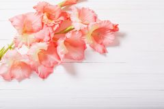 Gladioli on white wooden background. The gladioli on white wooden background Stock Photos