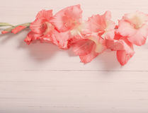 Gladioli on white wooden background Stock Images