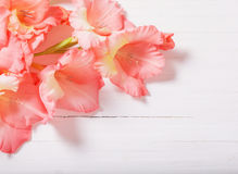 Gladioli on white wooden background Royalty Free Stock Photography