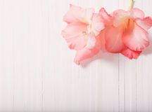 Gladioli on wooden background Royalty Free Stock Photography