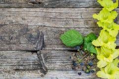 Gladiolo su un vecchio fondo di legno rustico Vista superiore Fotografia Stock
