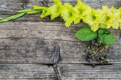Gladiolo su un vecchio fondo di legno rustico Vista superiore Fotografia Stock Libera da Diritti