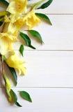Gladiolo y tarjeta amarillos con el lápiz en fondo de madera imagen de archivo libre de regalías