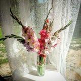 gladiolos Foto de archivo