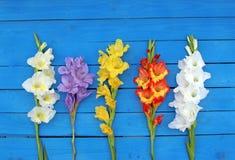 Gladiolos coloreados multi en tablones de madera azules Fotografía de archivo
