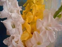 Gladiolusów kwiaty Fotografia Stock