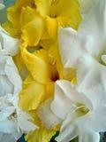 Gladiolusów kwiaty Zdjęcie Royalty Free