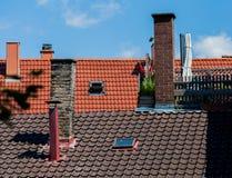 Gladiolus στη στέγη Ρομαντική εικόνα Στοκ Εικόνες