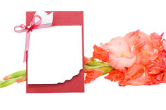 gladiolus συγχαρητηρίων στοκ φωτογραφία με δικαίωμα ελεύθερης χρήσης