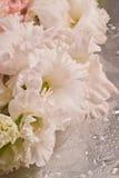 gladiolus Стоковые Изображения