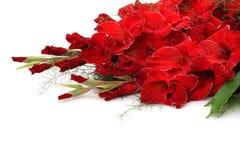 Gladiolus Royalty Free Stock Image
