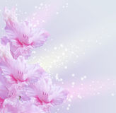 Gladiolus. Card with gladiolus and sparkling stars Royalty Free Stock Photo