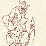 Gladiolus. Flower vector line illustration Stock Photo
