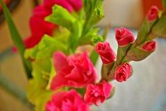 gladiolus Fotografia Stock Libera da Diritti