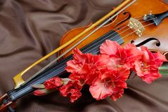 Free Gladiolus And Violin. Violin And Flowers On A Silk Background. Stock Image - 131418291
