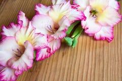 Gladiolus auf Kiefernholz stockfotos