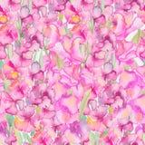 gladiolus Bloemen patroon Stock Afbeelding