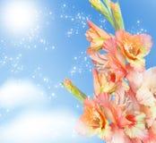 Gladiolus blossom Stock Photography