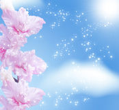 Gladiolus blossom Stock Images