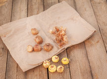 Gladiolus bulbs  on a wooden table Stock Photo