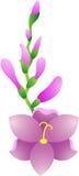 Gladiolus Flower. Beautiful illustration of a gladiolus flower, isolated Royalty Free Stock Photography