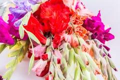 Gladiolus flower Royalty Free Stock Image
