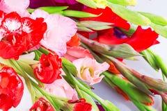 Gladiolus flower Royalty Free Stock Photo