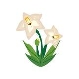 Gladiolus flower image icon Stock Image