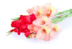 Gladiolus flower Royalty Free Stock Images