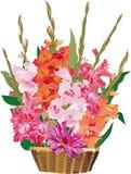Gladiolus flowers in basket. Illustration with gladiolus flowers in basket Stock Image