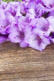 Gladiolus flowers Royalty Free Stock Photos