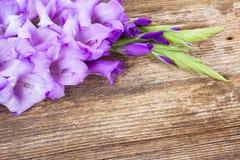 Gladiolus flowers. Fresh blue gladiolus flowers on wooden background stock photos