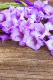 Gladiolus flowers Royalty Free Stock Photo